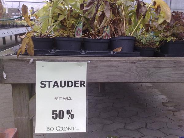 stauder1