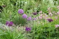 Allium prydløg i Frank Kirkegaards Have
