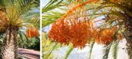 malagas botaniske have