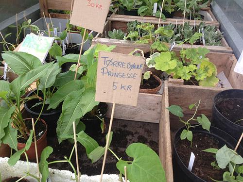 Havemarked Bornholm